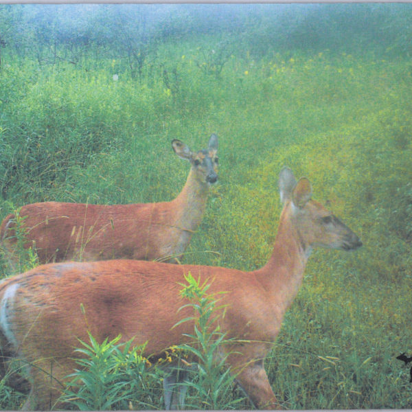 2 Deer Mousepad