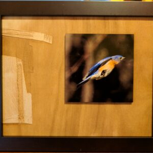 Bluebird Laser engraved and sublimated photograph