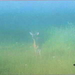 Foggy Deer Michigan Mousepad