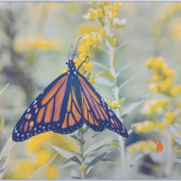 Monarch butterfly mousepad USA