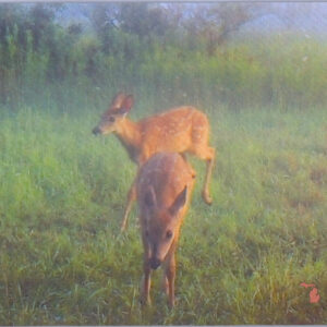 Twins Deer Fawn fawns Michigan Mousepad