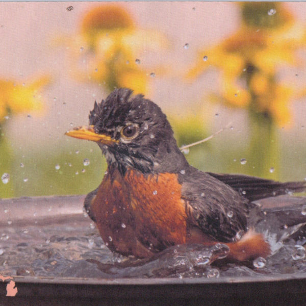 Bathing robin mousepad